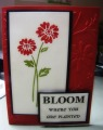 2014/06/16/BLOOM_where_you_are_planted_by_christinesmom2004.jpg