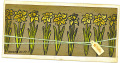 2013/05/10/Hello_Daffodils_by_StampingJay.jpg