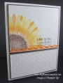2013/03/29/Sunflower_Stampin_Up_by_dboos.JPG