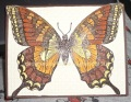2013/06/10/DH_Swallowtail_on_lattice_by_diane617.jpg