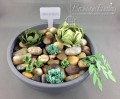 2016/04/22/Succulents_3_by_BronJ.jpg