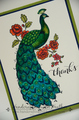 2014/06/23/perfect-peacock-4-of-5_by_hvanlooy.jpg?w=560