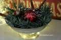 2014/11/06/640X-Evergreen-Bowl-Graphic_by_ScrapNGrow.png