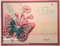 2015/09/02/Melon_Mambo_Butterfly_in_Bermuda_Card_with_wm_by_lnelson74.jpg