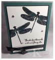 dragonfly-