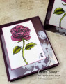 2018/04/29/graceful_garden_petal_passion_memories_and_more_acetate_card_idea_blackberry_bliss_stampin_up_pattystamps_by_PattyBennett.jpg