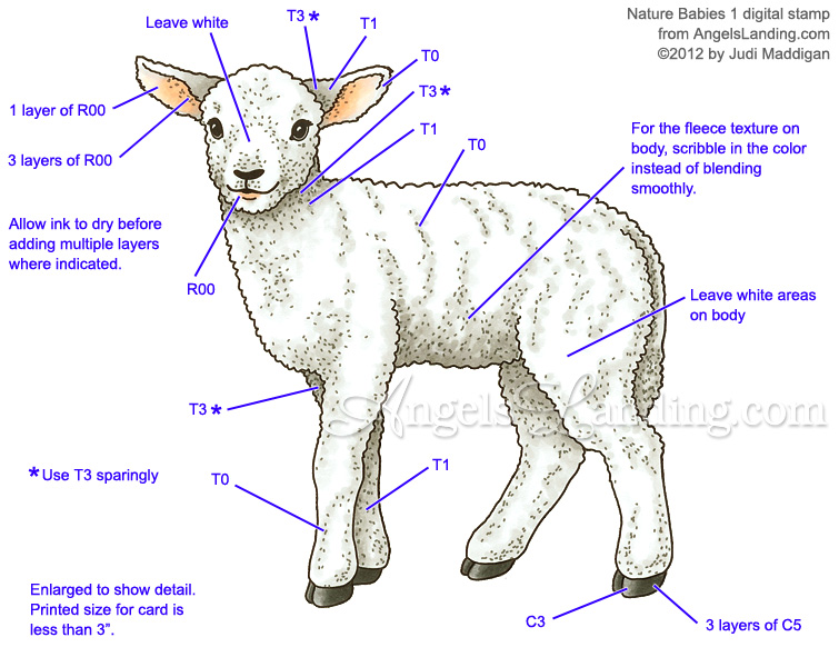 Copic Coloring Guide: Lamb from Nature Babies 1 by Crafts - at ...