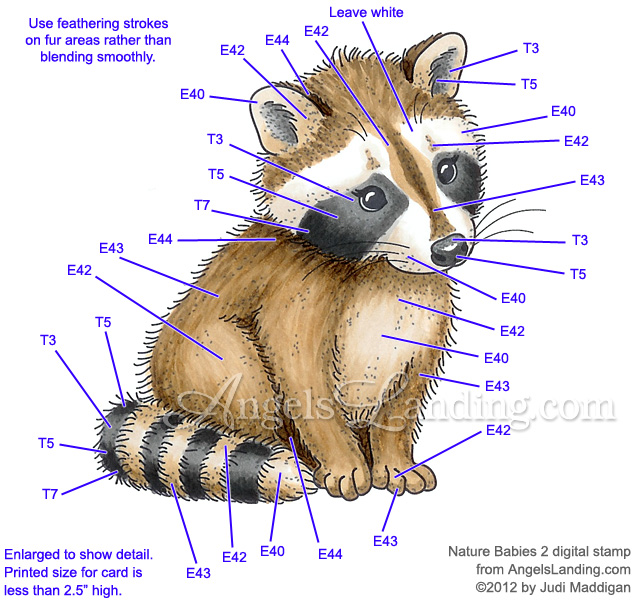 Baby Raccoon Coloring Guide by Crafts - at Splitcoaststampers