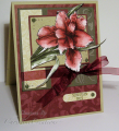 2008/07/29/Burgundy_Iris_CO_Jul_08_by_ChristineCreations.png