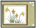 2011/03/30/Spring_Daffodils_by_seseid.png