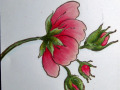 2013/05/02/Rose_-_Copic_Sample_by_ChaosMom.JPG