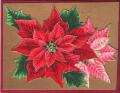 2013/05/03/Poinsettia_Recycled_-_CCC13_April_001_by_triasimite.jpg