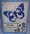 2013/05/07/CC423_annsforte3_Special_Sparkle_Butterfly_by_annsforte3.jpg