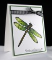 dragonfly_