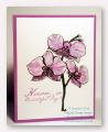 2013/05/22/Orchids_beautiful_day_etsy_by_moonrise.jpg