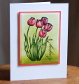 2013/05/25/Spring_Tulips_by_Calico.jpg