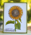 2013/08/27/sunflower_large_082713_by_stamp_momma.jpg