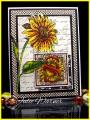 2014/05/10/Sunflower_03574_by_justwritedesigns.jpg
