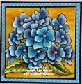 2014/08/13/hydrangea_blueyellow_by_jennie_black.jpg