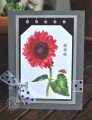 2016/02/07/Red-sunflower-tag-card_by_kitchen_sink_stamps.jpg