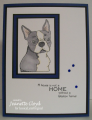 2016/02/20/jlo_boston_terriers_4_by_Forest_Ranger.png