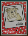 2016/03/21/jlo_bulldog_1_by_Forest_Ranger.png