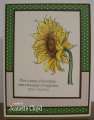 2016/06/01/sunflower_1_by_Forest_Ranger.png