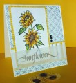 2017/02/17/sunflower_card_by_NancyK_.jpg