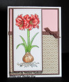 2018/04/10/Amaryllis01A_by_StitchesandSmudges.jpg
