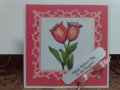 2018/05/26/Two_Coral_Tulips_by_Precious_Kitty.JPG