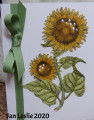 2020/06/04/Sunflowers_by_Precious_Kitty.JPG