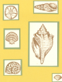 2006/06/28/Stipple_Shells_by_Ksullivan.png