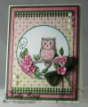 2016/02/03/HC_wwm_Pink_Owl_Perched_by_rosekathleenr.jpg